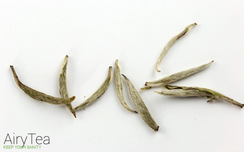 Why You Should Drink White Tea and How It Benefits You