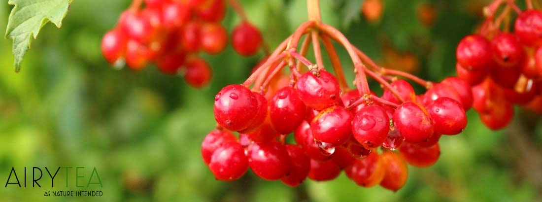 Top 10 Hawthorn Tea Health Benefits / Effects