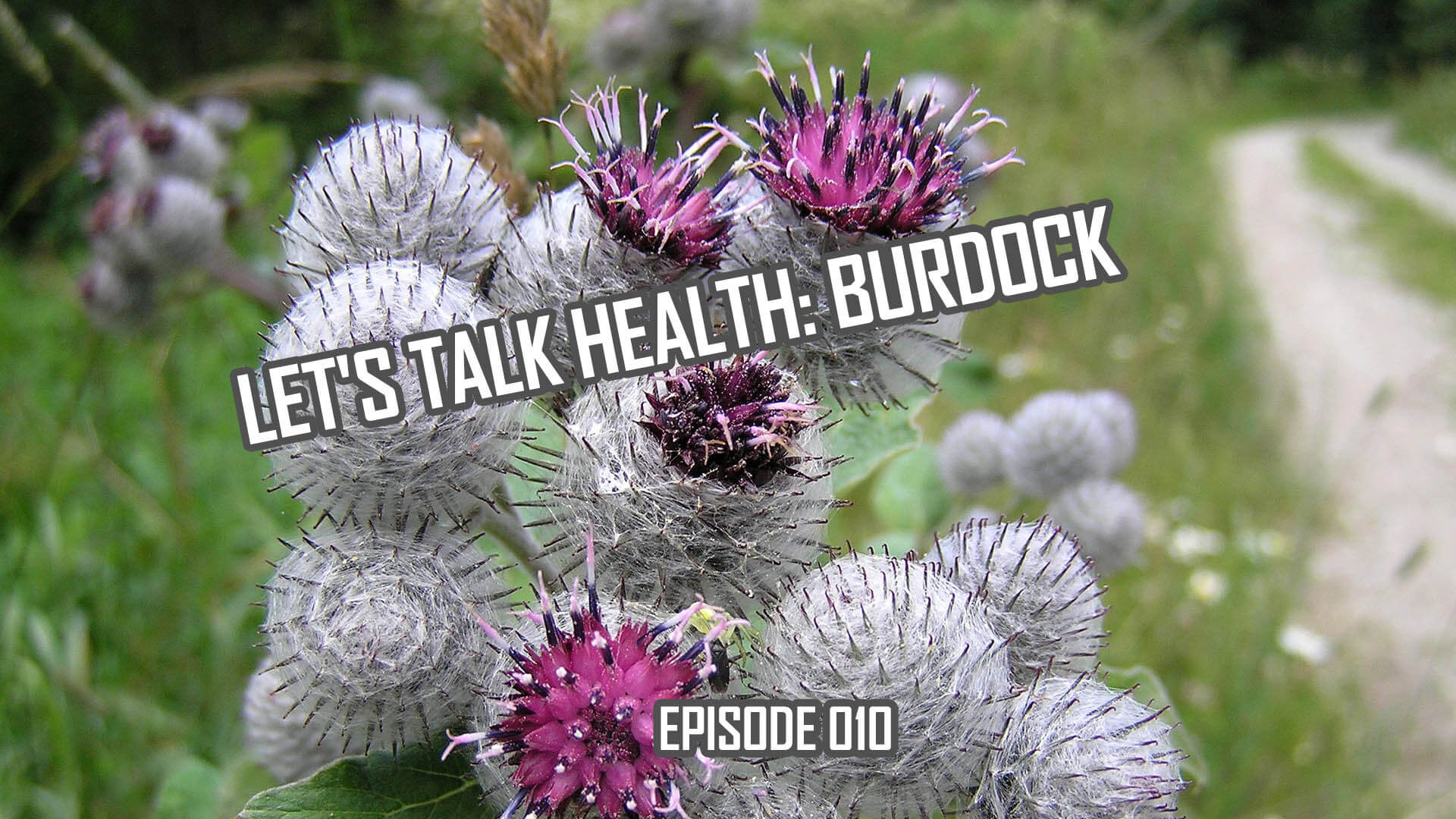 Let's Talk Health: Burdock Root History and Health Effects (010)