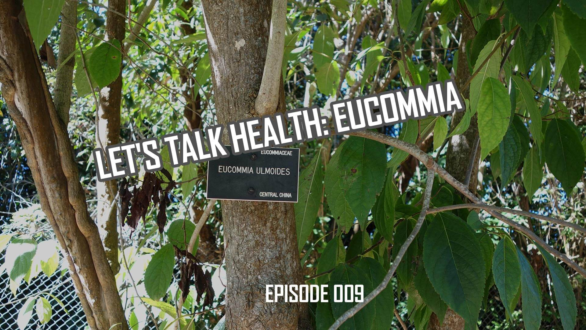 Let's Talk Health: Eucommia Plant History and Health Effects (009)