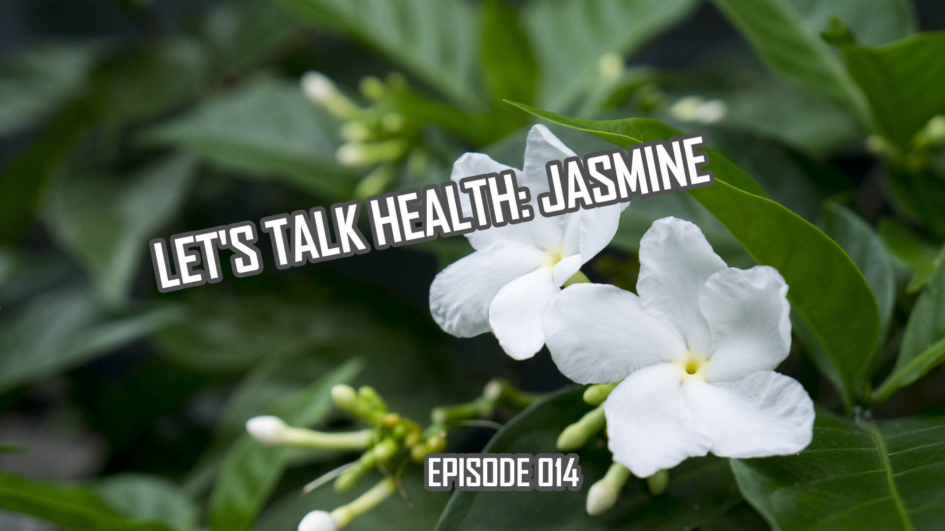 Jasmine History and Health Effects